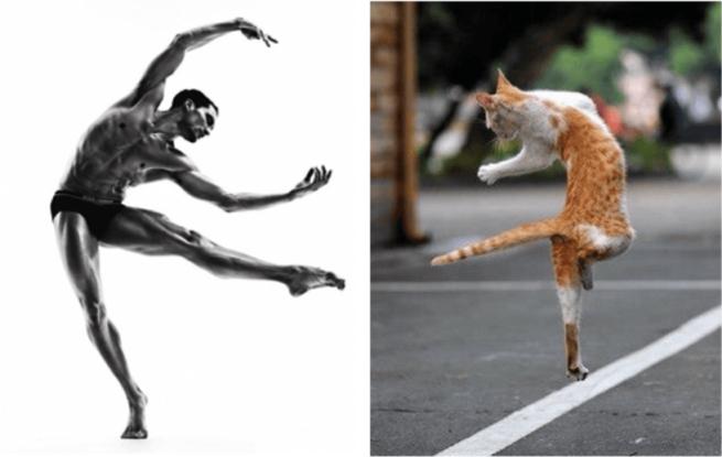 Faceci i koty13