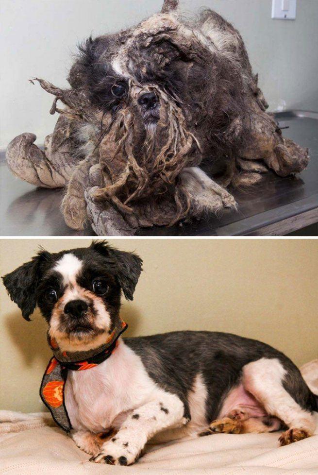 bezdomne uratowane psy