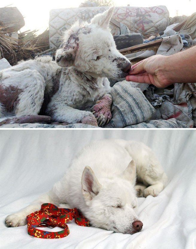 bezdomne uratowane psy2