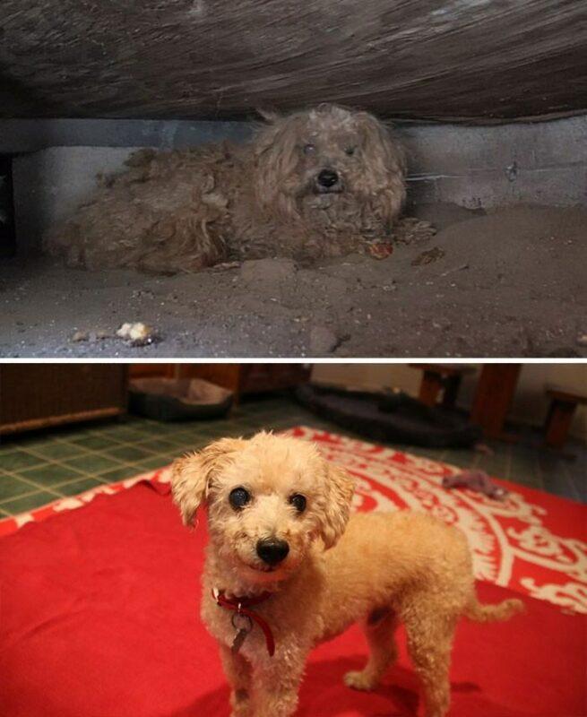 bezdomne uratowane psy8