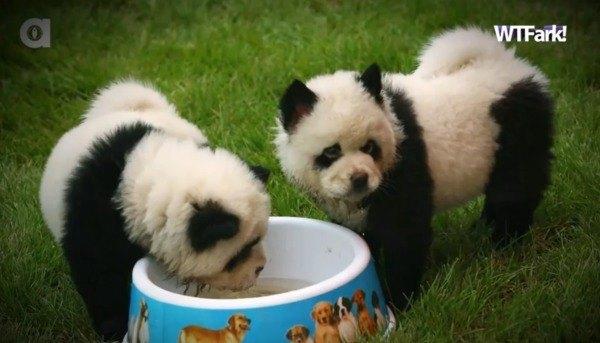 psy panda 4
