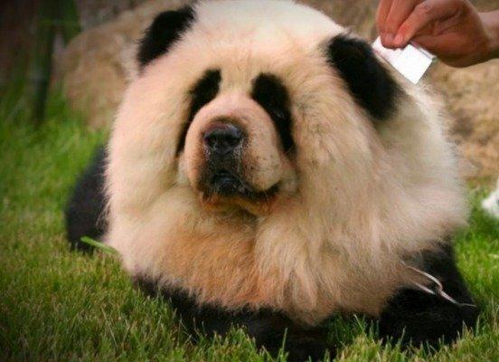 psy panda 6