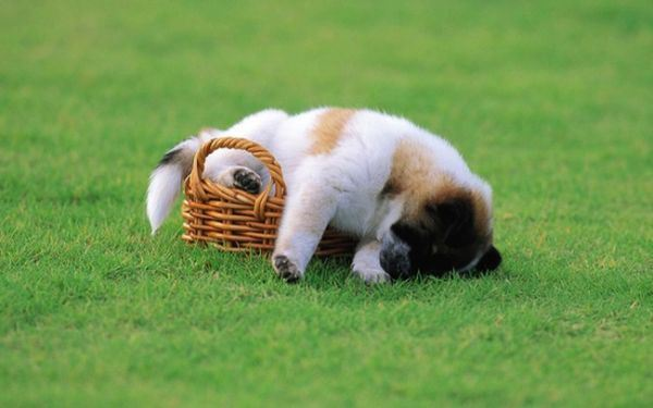 Śpiące psy