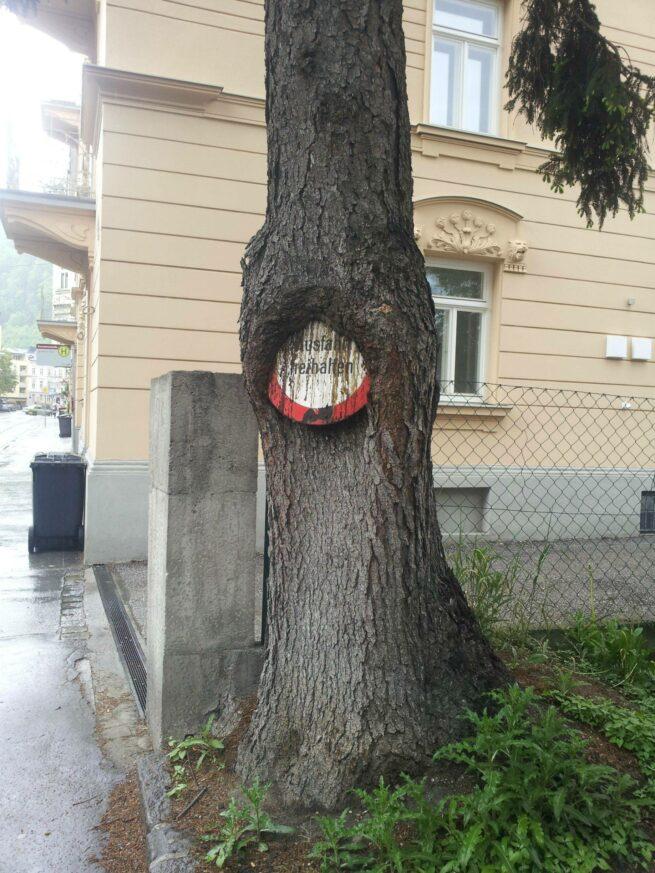 Drzewa pochłaniające przedmioty 1