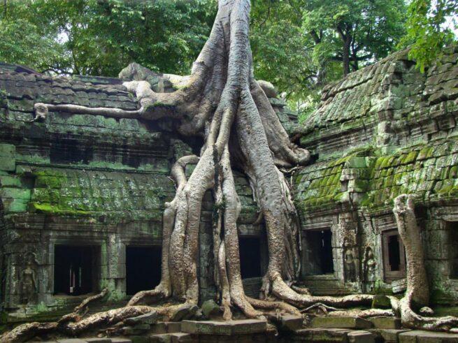 Drzewa pochłaniające przedmioty 10