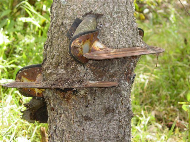 Drzewa pochłaniające przedmioty 11