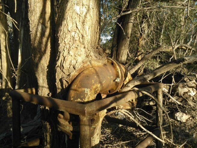 Drzewa pochłaniające przedmioty 13