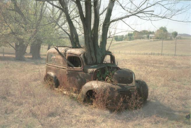Drzewa pochłaniające przedmioty 3