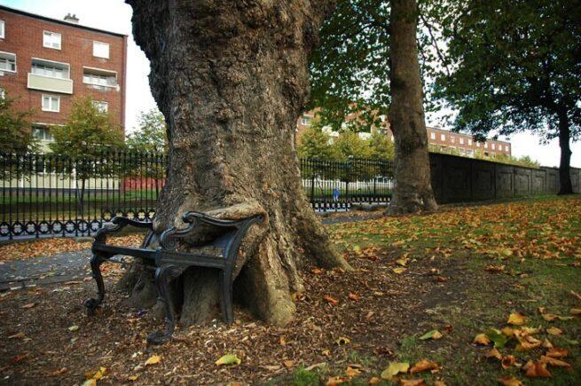 Drzewa pochłaniające przedmioty 5