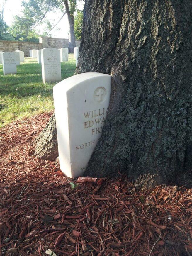 Drzewa pochłaniające przedmioty 6