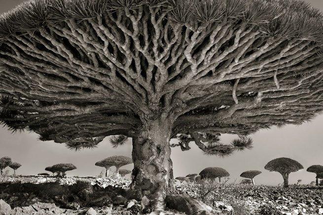 Kobieta spędziła 14 lat na fotografowaniu najstarszych drzew na świecie 1