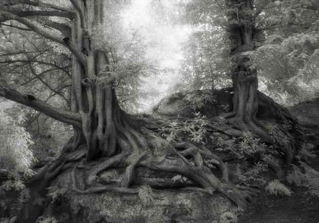 Kobieta spędziła 14 lat na fotografowaniu najstarszych drzew na świecie 10