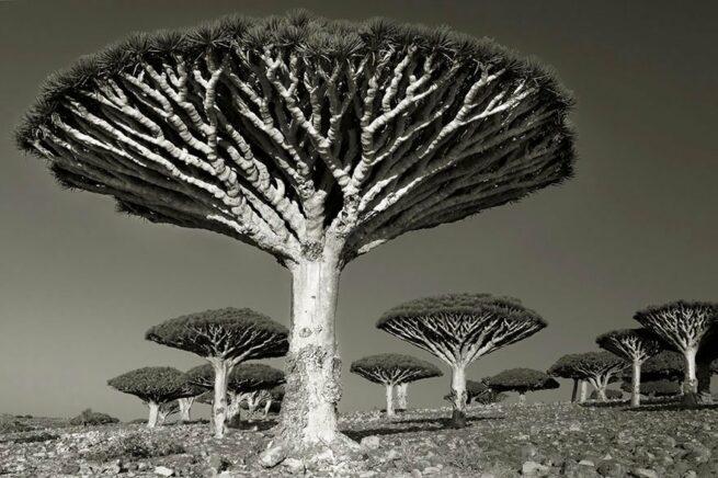 Kobieta spędziła 14 lat na fotografowaniu najstarszych drzew na świecie 11