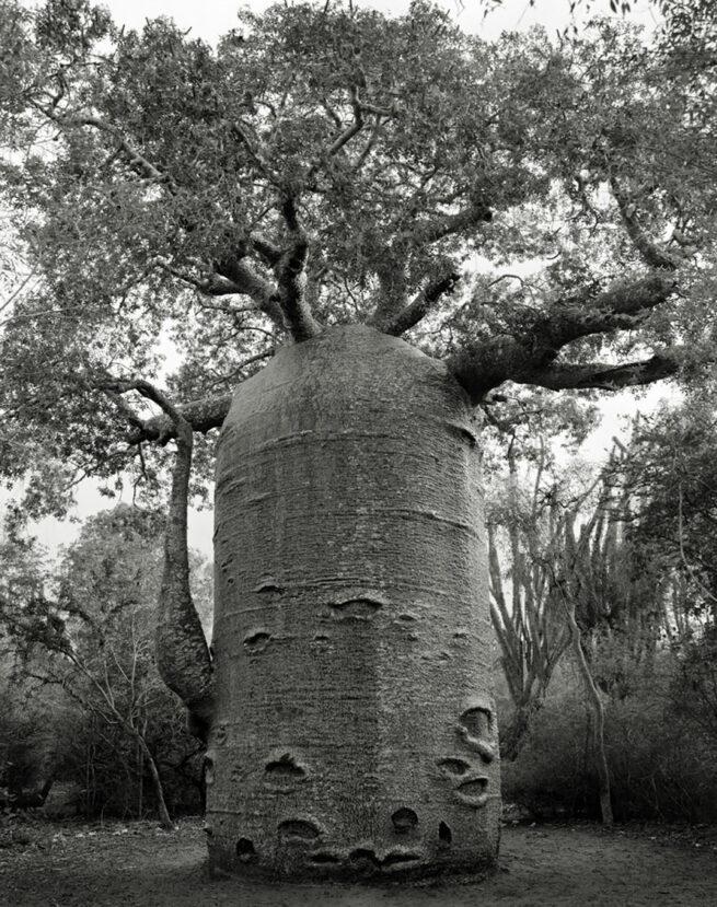 Kobieta spędziła 14 lat na fotografowaniu najstarszych drzew na świecie 12