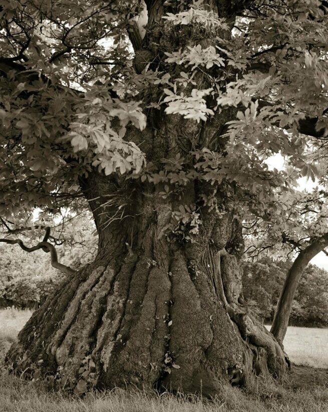 Kobieta spędziła 14 lat na fotografowaniu najstarszych drzew na świecie 13