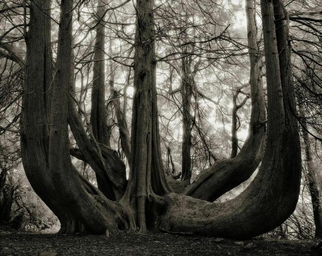 Kobieta spędziła 14 lat na fotografowaniu najstarszych drzew na świecie 14
