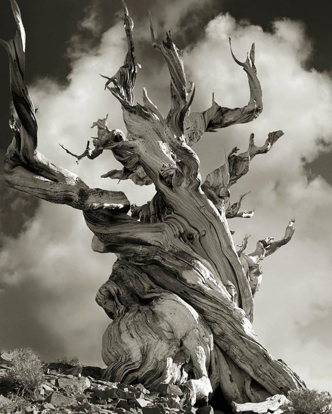 Kobieta spędziła 14 lat na fotografowaniu najstarszych drzew na świecie 15
