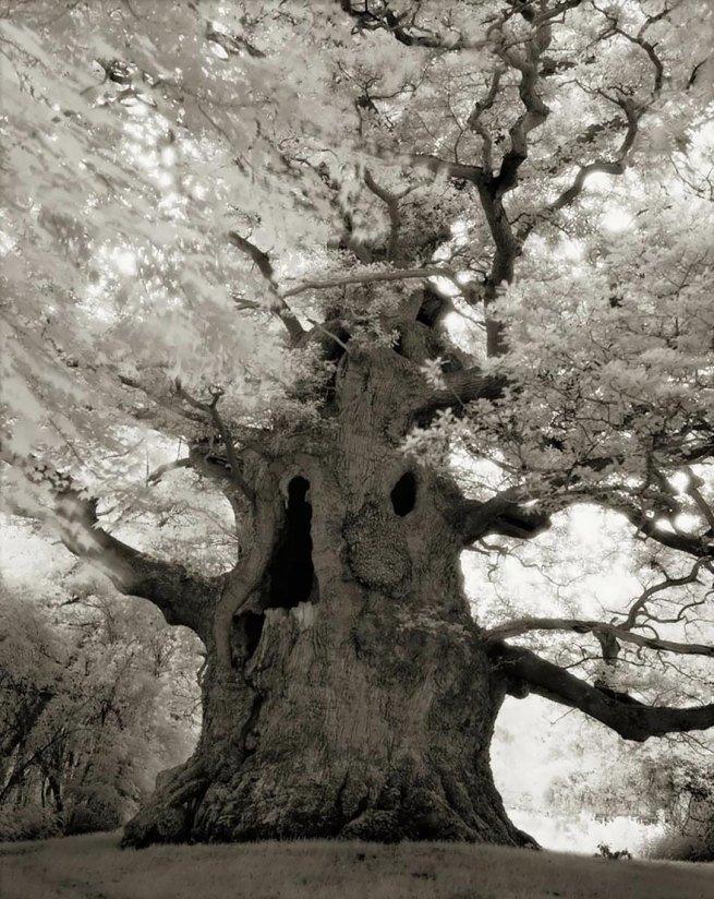 Kobieta spędziła 14 lat na fotografowaniu najstarszych drzew na świecie 16