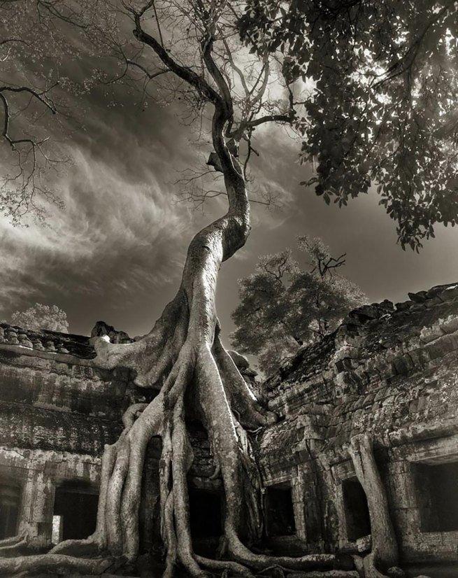 Kobieta spędziła 14 lat na fotografowaniu najstarszych drzew na świecie 17