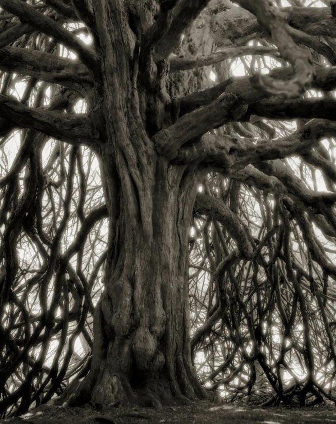Kobieta spędziła 14 lat na fotografowaniu najstarszych drzew na świecie 18