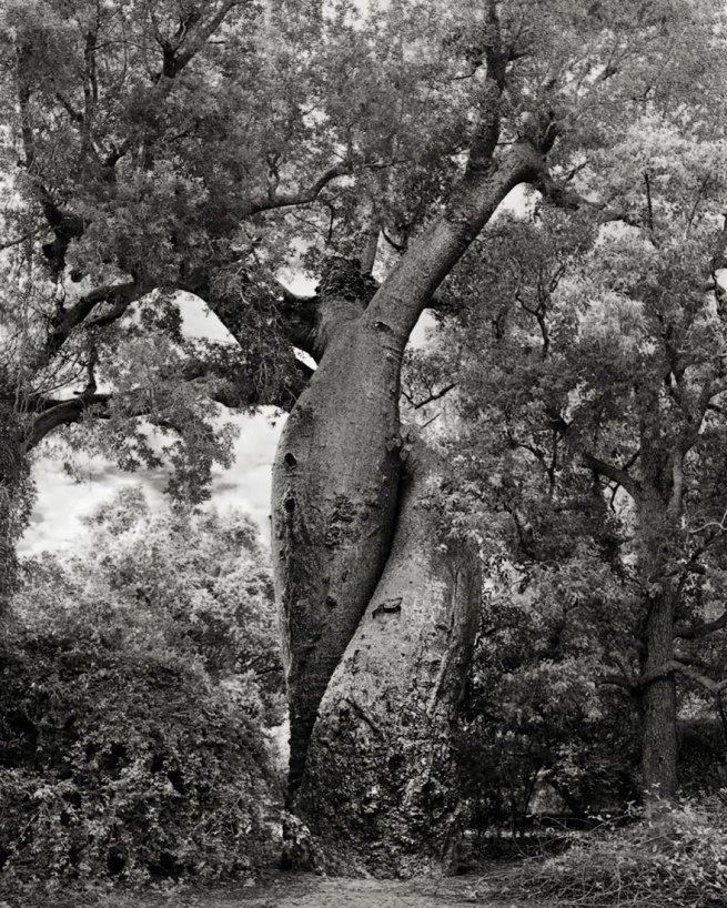 Kobieta spędziła 14 lat na fotografowaniu najstarszych drzew na świecie 20
