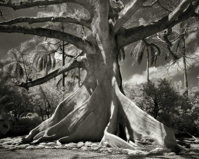 Kobieta spędziła 14 lat na fotografowaniu najstarszych drzew na świecie 3