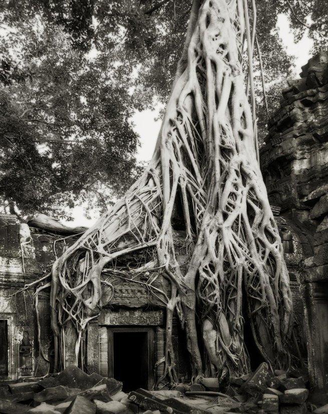 Kobieta spędziła 14 lat na fotografowaniu najstarszych drzew na świecie 4