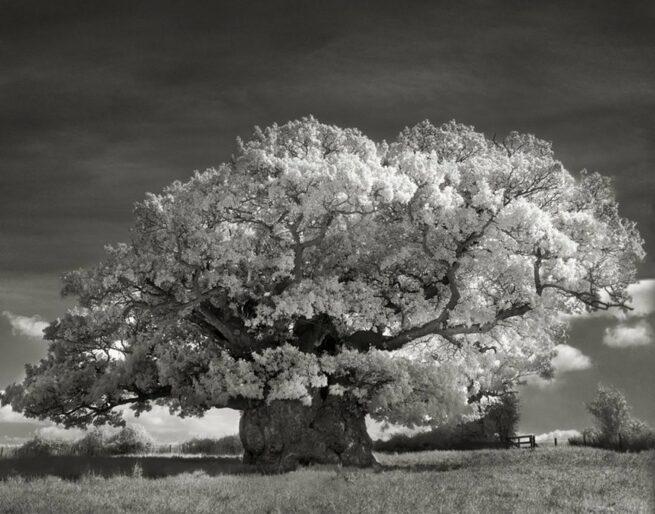 Kobieta spędziła 14 lat na fotografowaniu najstarszych drzew na świecie 5