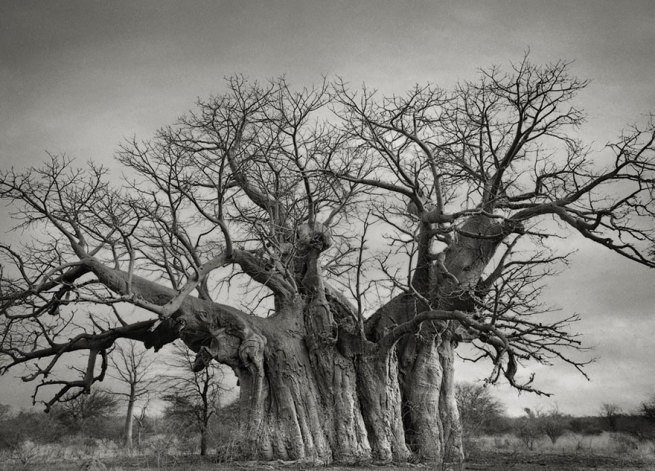 Kobieta spędziła 14 lat na fotografowaniu najstarszych drzew na świecie 6