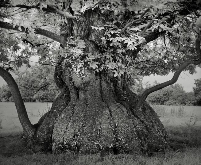 Kobieta spędziła 14 lat na fotografowaniu najstarszych drzew na świecie 7
