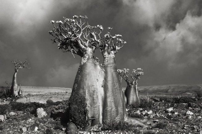 Kobieta spędziła 14 lat na fotografowaniu najstarszych drzew na świecie 8