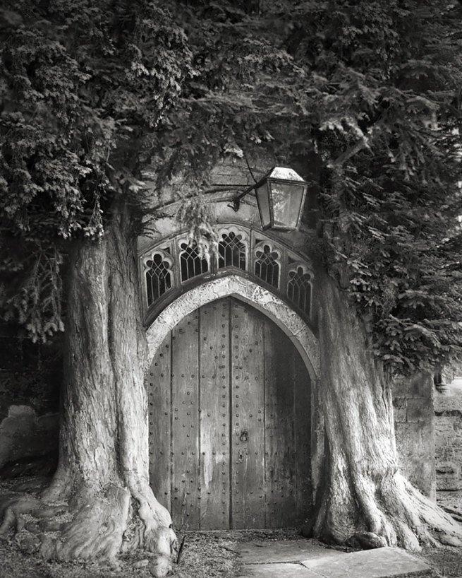 Kobieta spędziła 14 lat na fotografowaniu najstarszych drzew na świecie 9