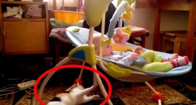 kot buja dziecko w foteliku