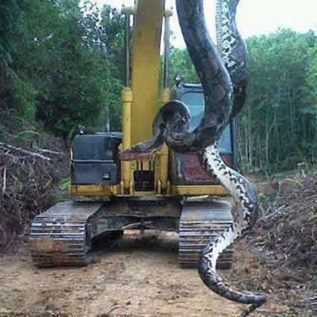ogromne węże znalezione w Ameryce i Azji 1