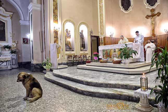 Ten pies chodził do kościoła codziennie