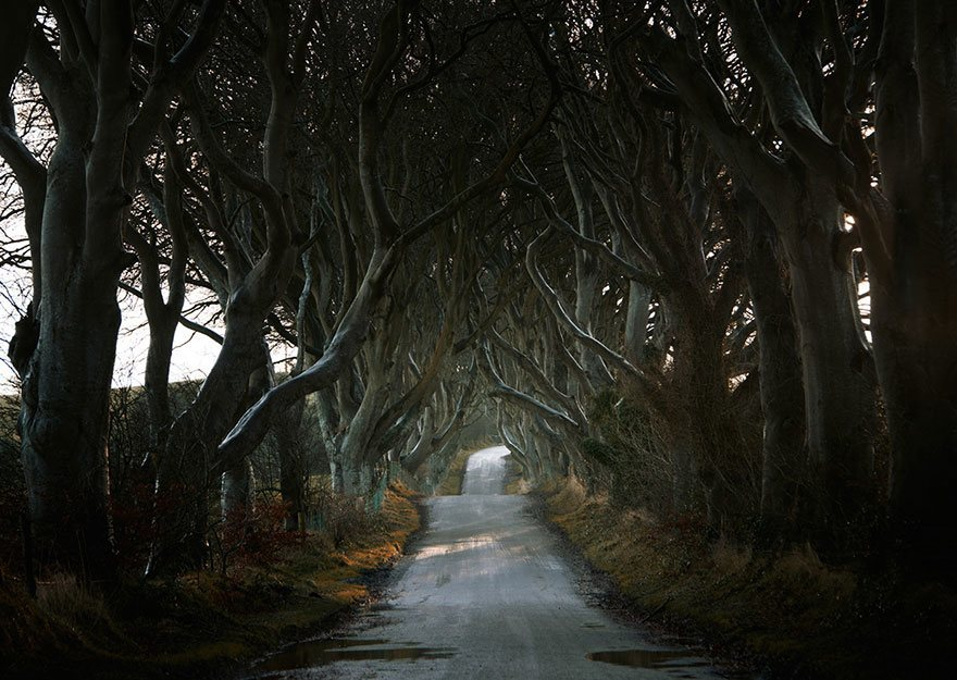 The Dark Hedges, Northern Ireland lato