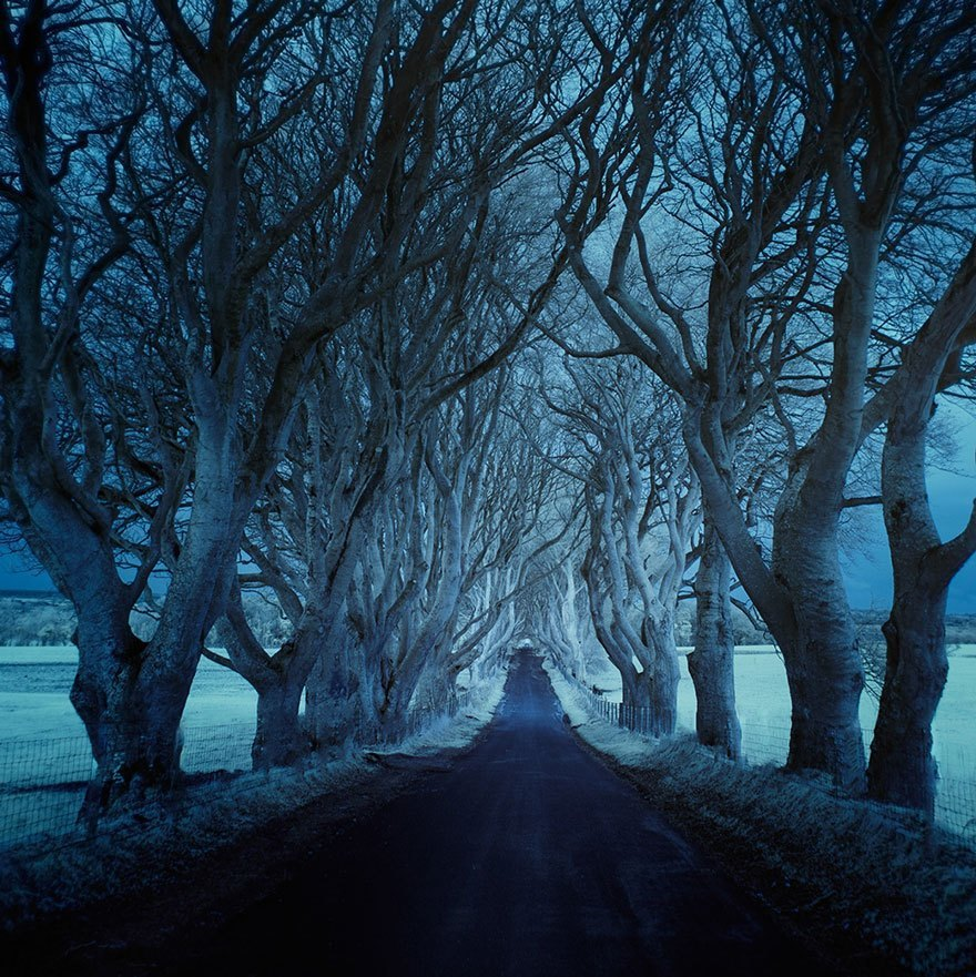 The Dark Hedges, Northern Ireland zima