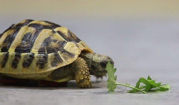 zółw i klocki lego  2