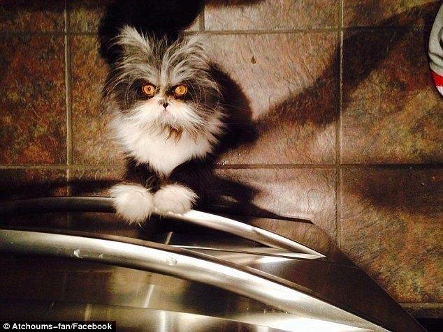 Kot, który budzi lęk