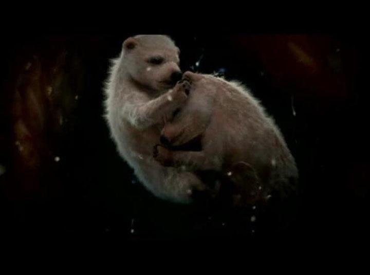 niedzwiedzie polarne