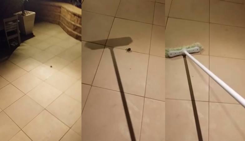 zabić pająka miotłą