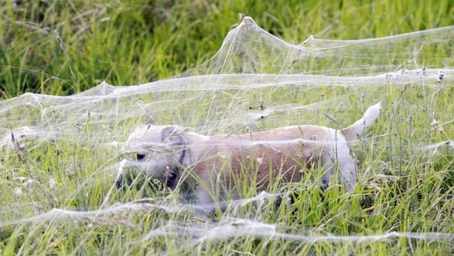 deszcz pająków 3