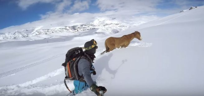 ratunek konia w sniegu