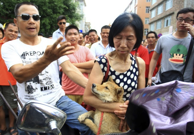 China Dog Meat Festival   XHG802