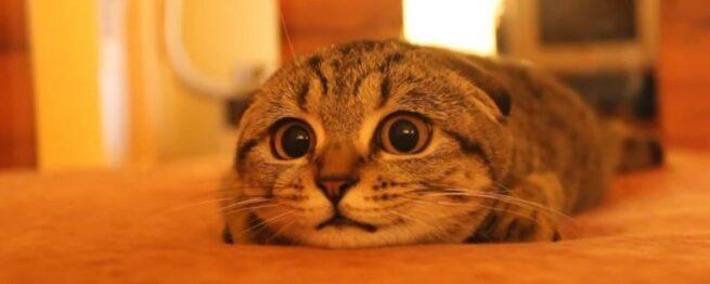 Ten Kot Nie Zmienił Pozycji Przez Cały Filmik Ale Ty Nie Będziesz