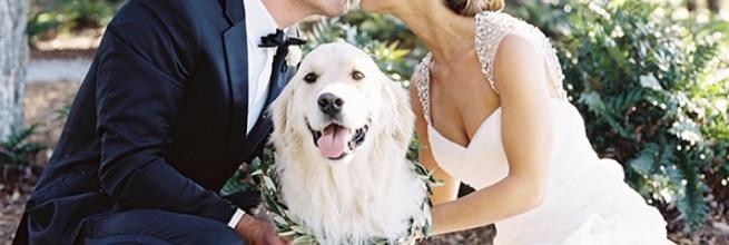 21 psów, które towarzyszyły właścicielom w najważniejszym dniu życia