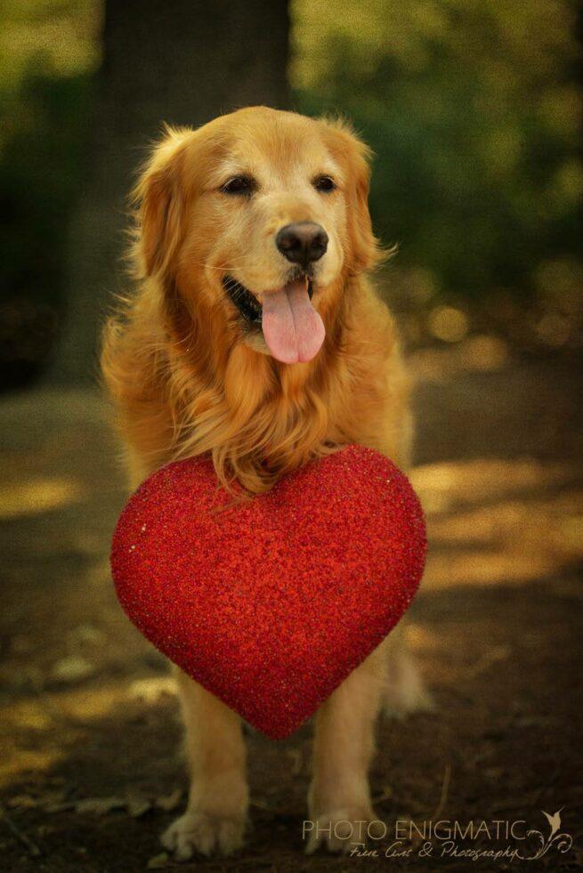 kiedy pies Cię kocha 2